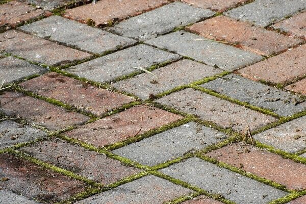 Cách tẩy rêu trên gạch nền