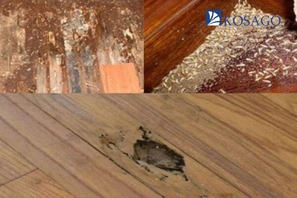 nguyên nhân sàn gỗ công nghiệp bị mối mọt